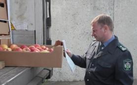 Польские яблоки вернулись на родину
