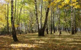 Депутаты Смоленского горсовета спасают «Русские березы»