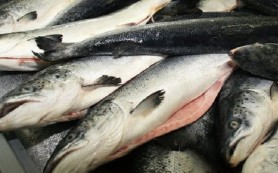 Смоленщина может заняться переработкой дальневосточного лосося