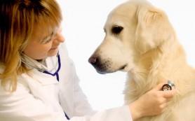 Препараты для лечения собак