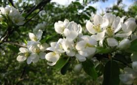 К выходным в Смоленскую область придет настоящая весна
