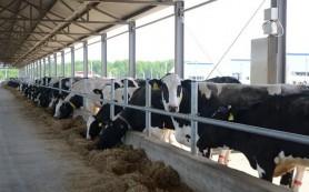 Смоленская область становится территорией мясо-молочного животноводства