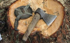 В Смоленской области орудовал «черный» лесоруб