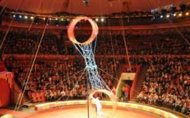Упавший из-под купола цирка акробат чудом остался жив