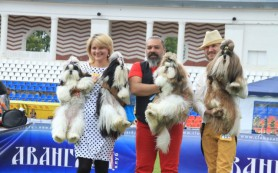 В Смоленске состоялась международная выставка собак.