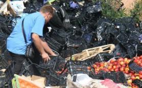 Недораздавленным санкционным персикам мешают испортиться селяне