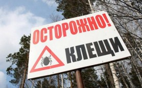 В Смоленской области вновь разгулялись клещи