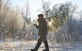 В Смоленской области начали следить за незаконной вырубкой елок