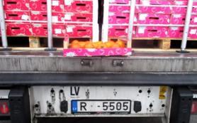 Санкционные фрукты пытались ввезти в Смоленск под видом кваса и сахара