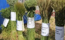 Почти 50 миллионов рублей получит Смоленская область на развитие сельского хозяйства