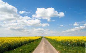 Смоленщина получит субсидии на строительство и реконструкцию сельских дорог