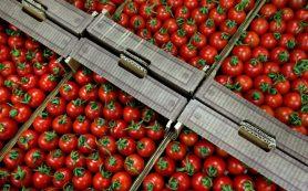 На рынках Смоленска в открытую торговали «санкционкой»: турецкими томатами и испанскими апельсинами