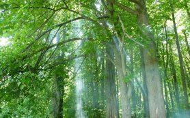 Под Смоленском оборудуют экологическую тропу в природном парке «Гагаринский»