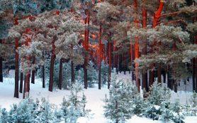 Красный Бор в Смоленске стал Памятником природы
