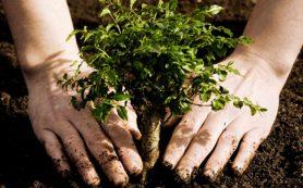 Где в Смоленске высадят деревья
