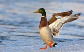 В «Смоленском Поозерье» пройдут соревнования по «фотографированию птиц»