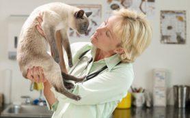 Сальмонеллез у кошек — особенности заболевания