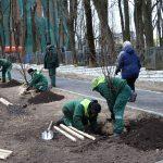 Липовая аллея высажена в центре Смоленска