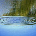 В Смоленске в Реадовском озере утонул молодой мужчина