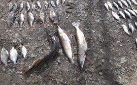 Смоленский рыбак может сесть в тюрьму на два года