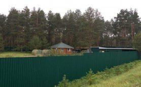 Русская служба Би-би-си рассказала об участке леса «смоленского помещика»