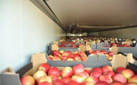 В Смоленской области уничтожат 120 тонн польских яблок и груш