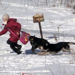 """""""И напасть могут, и гадят"""": собаки облюбовали территорию 35-й школы в Смоленске"""