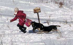 «И напасть могут, и гадят»: собаки облюбовали территорию 35-й школы в Смоленске
