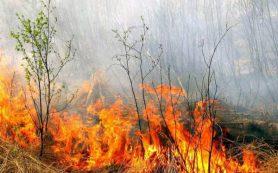 Госдума приняла закон об ужесточении ответственности за сокрытие информации о лесных пожарах