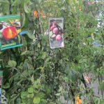 В Смоленске с 19 по 21 апреля пройдет ярмарка «Сад-огород»