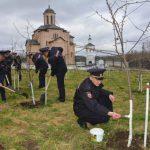 В Смоленске полицейские благоустроили яблоневый сад