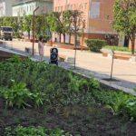 В сквере на Коммунистической в Смоленске выполнили озеленение