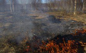 Сотрудники Гринпис обнаружили горение торфа в смоленских лесах