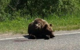 В Смоленской области иномарка сбила медведя