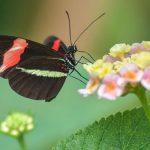 В «Смоленском Поозерье» подготовили «Летопись природы»
