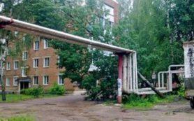 Дерево упало на трубы теплотрассы в Рославле