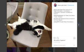 Губернатор Смоленщины поделился в соцсети снимком домашнего животного
