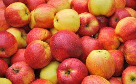 В Смоленске задержали 20 тонн санкционных яблок