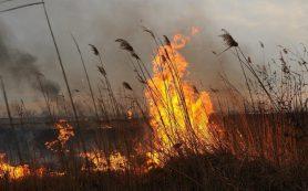 «Желтый» уровень опасности объявлен в Смоленской области на 27 августа