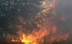 Более половины гектара леса уничтожил пожар в Велижском районе