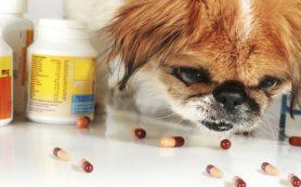 В Смоленске продают некачественные лекарства для животных