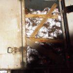 В Курск через Смоленскую область не пустили более 32 тысяч саженцев садовой малины «Полан»