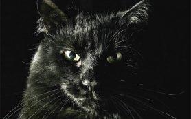 Кошка-путешественница из Смоленска стала героиней интернета