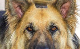 Хозяина беременной собаки ищут в Смоленске