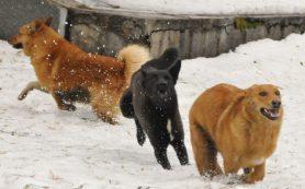 Жители Рославля рассказали о своре собак возле детской поликлиники