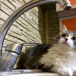 В Смоленске на Черняховке отключат воду