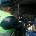 Смоленские таможенники задержали 20 тонн странных шампиньонов