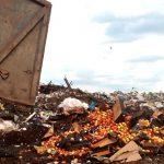 Мушмулу, киви и персики «похоронили» в Смоленской области
