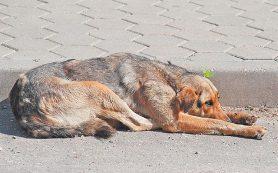 В Смоленске пройдет дискуссия на тему установки памятника собаке Полкану