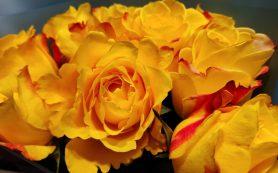 На Смоленщину пытались завезти розы с трипсом